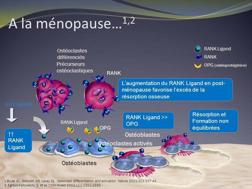 A la ménopause…1,2 Ostéoblastes Ostéoclastes activés Ostéoblastes