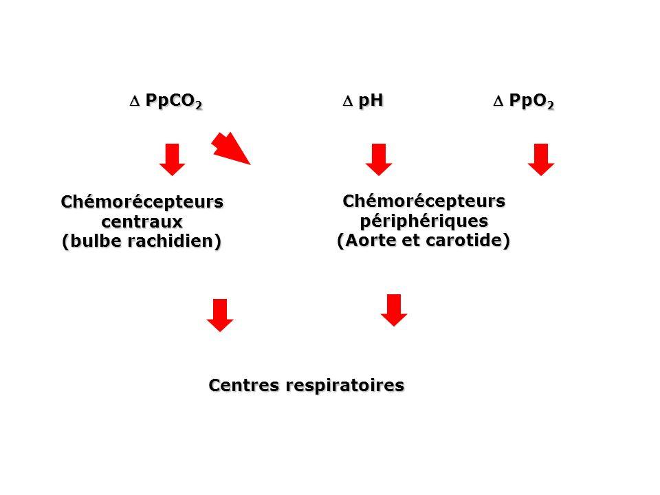 Chémorécepteurs centraux (bulbe rachidien)