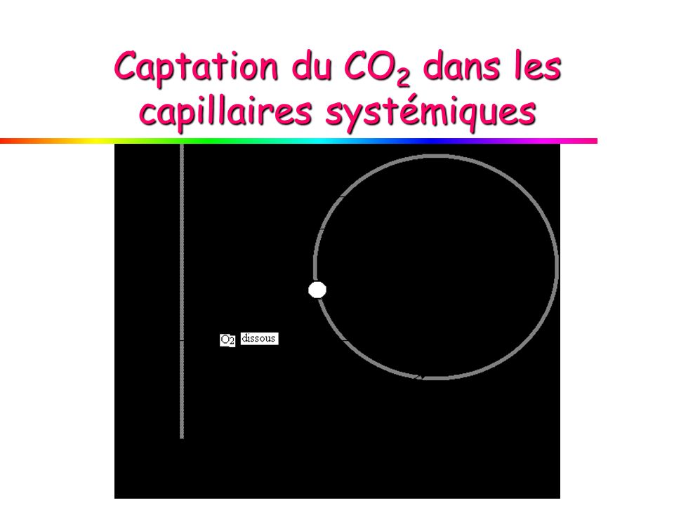 Captation du CO2 dans les capillaires systémiques