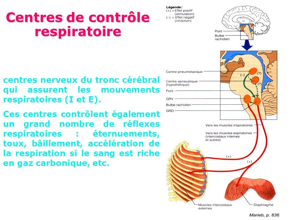 Centres de contrôle respiratoire