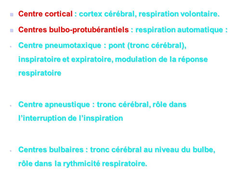 Centre cortical : cortex cérébral, respiration volontaire.