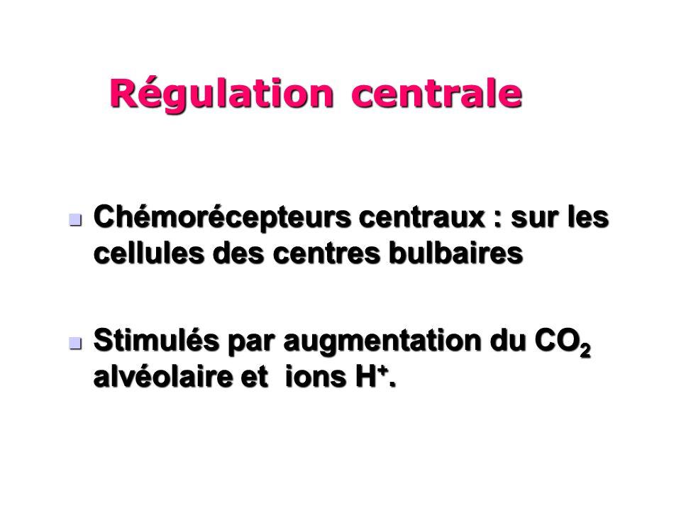 Régulation centrale Chémorécepteurs centraux : sur les cellules des centres bulbaires. Stimulés par augmentation du CO2 alvéolaire et ions H+.