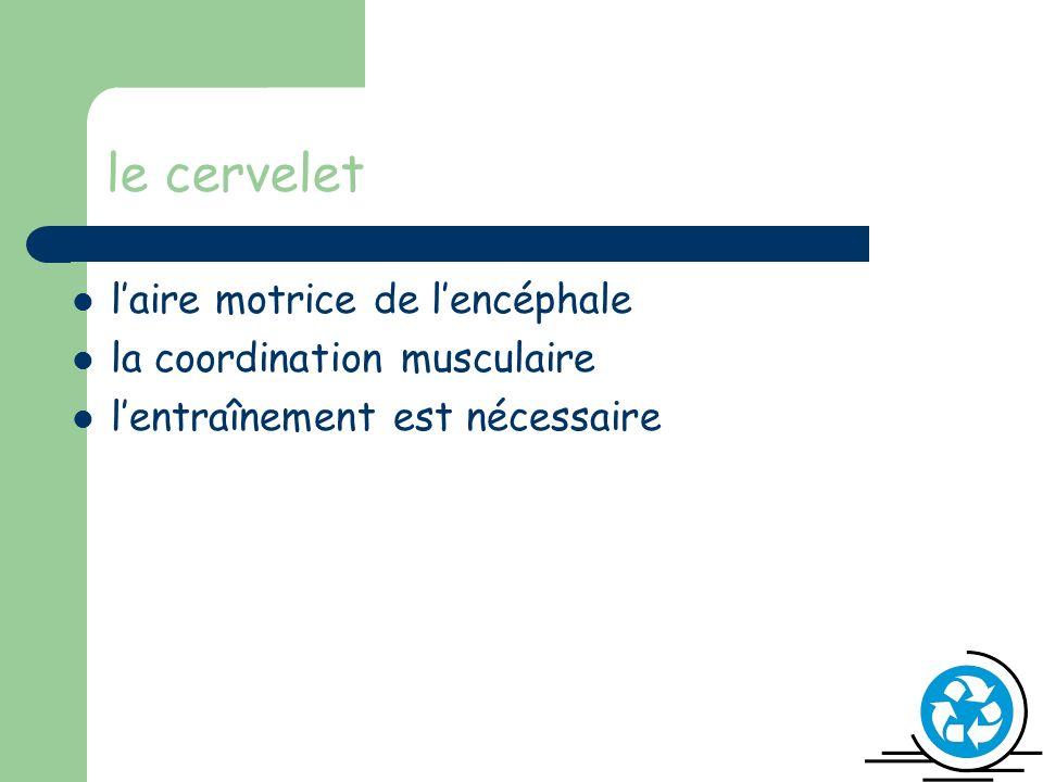 le cervelet l'aire motrice de l'encéphale la coordination musculaire