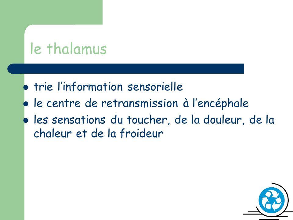 le thalamus trie l'information sensorielle