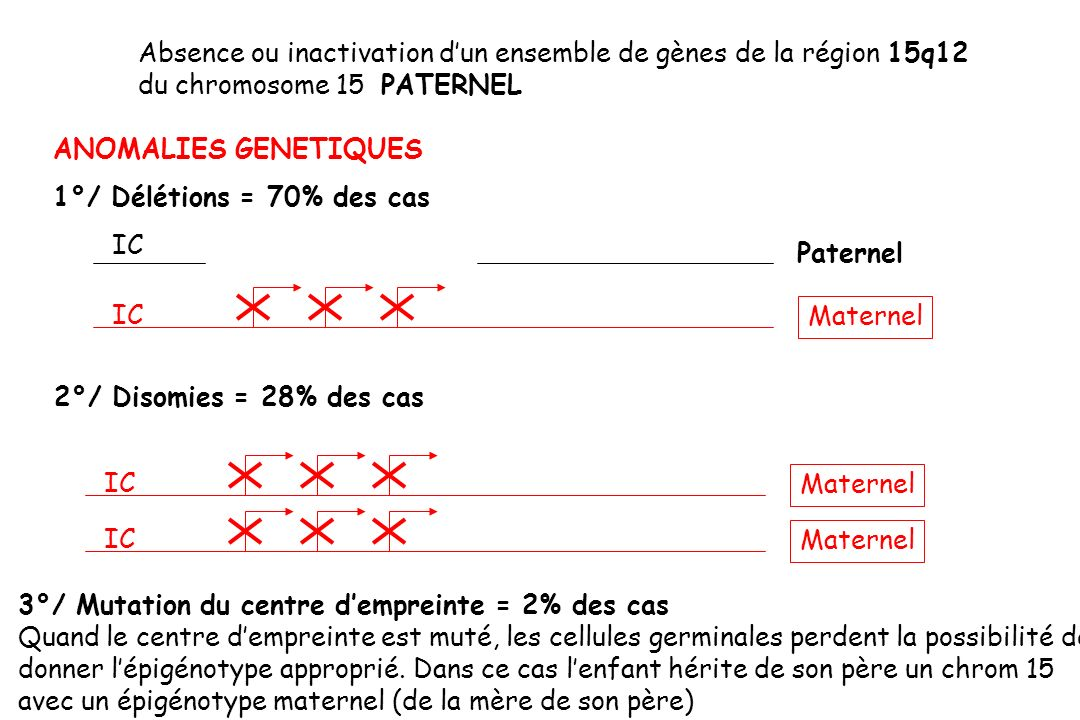 Absence ou inactivation d'un ensemble de gènes de la région 15q12