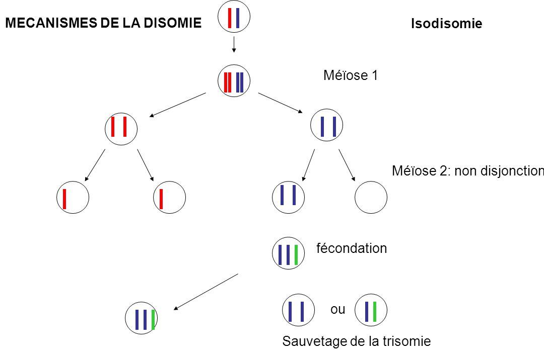 MECANISMES DE LA DISOMIE
