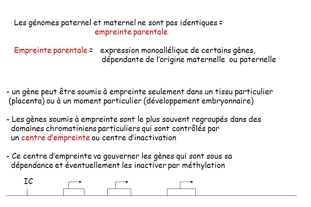 Les génomes paternel et maternel ne sont pas identiques =