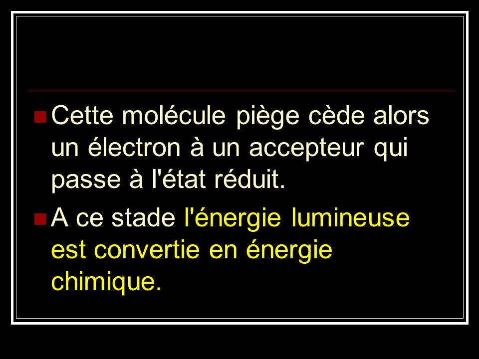 Cette molécule piège cède alors un électron à un accepteur qui passe à l état réduit.