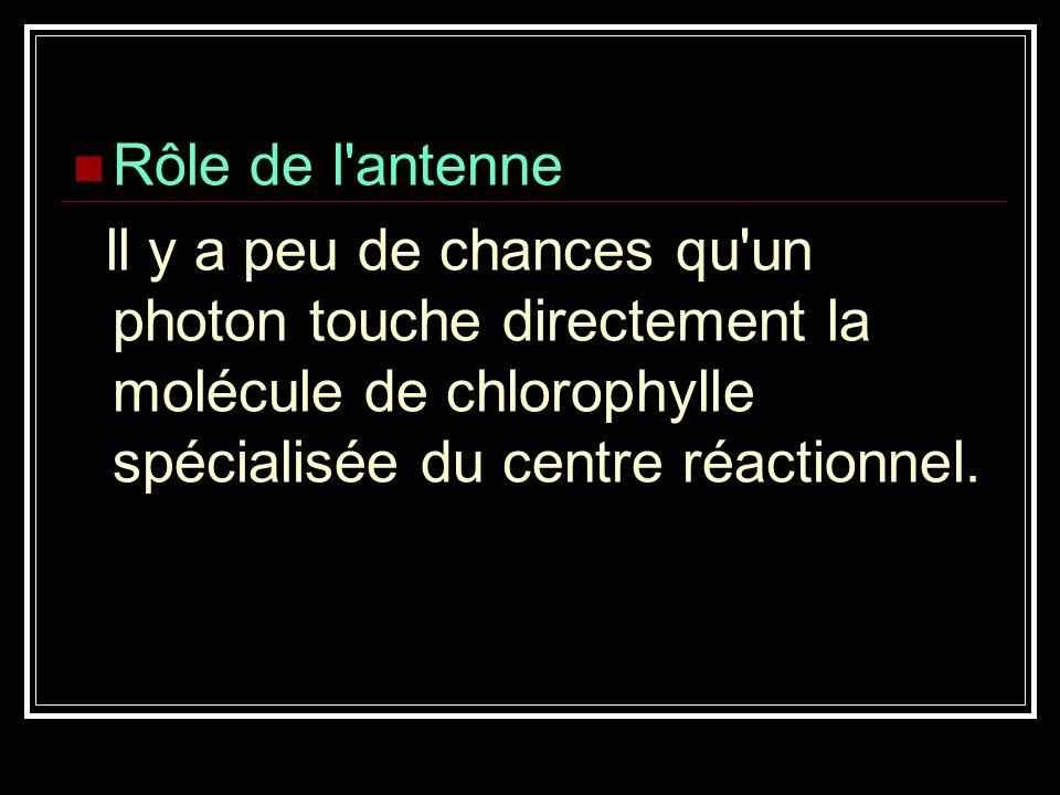 Rôle de l antenne ll y a peu de chances qu un photon touche directement la molécule de chlorophylle spécialisée du centre réactionnel.