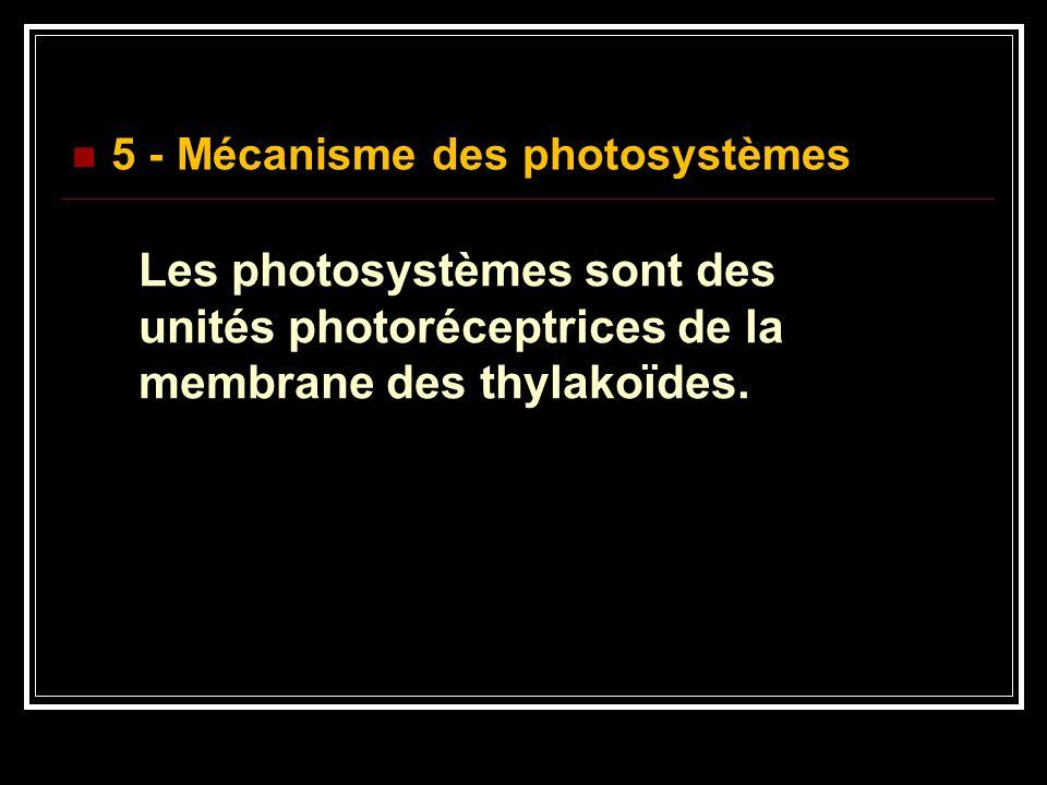 5 - Mécanisme des photosystèmes