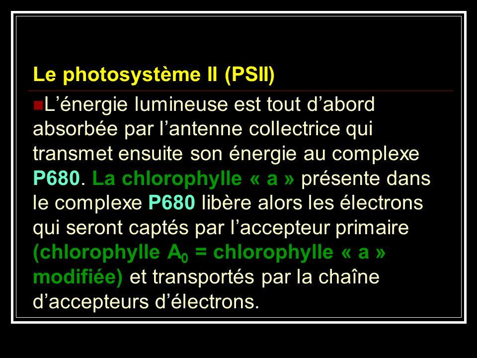 Le photosystème II (PSII)