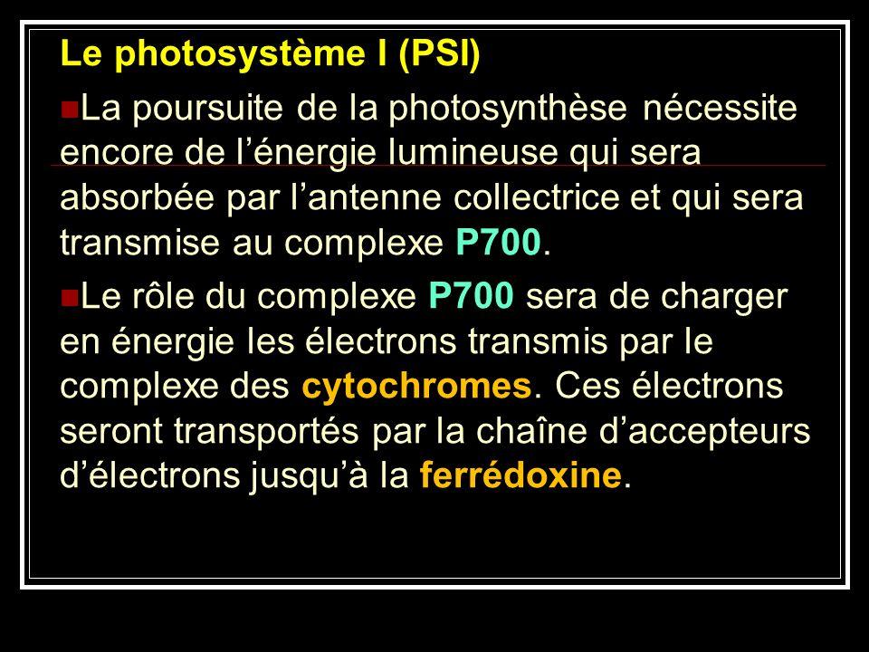 Le photosystème I (PSI)