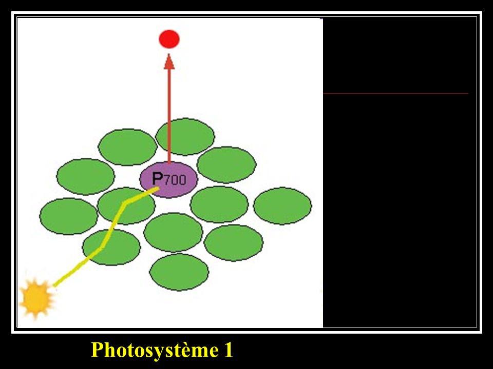 Photosystème 1