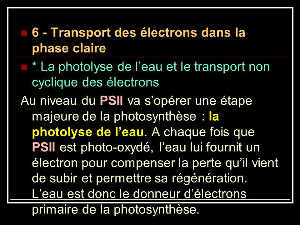 6 - Transport des électrons dans la phase claire