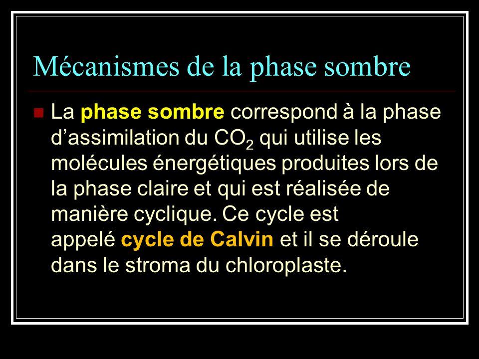 Mécanismes de la phase sombre