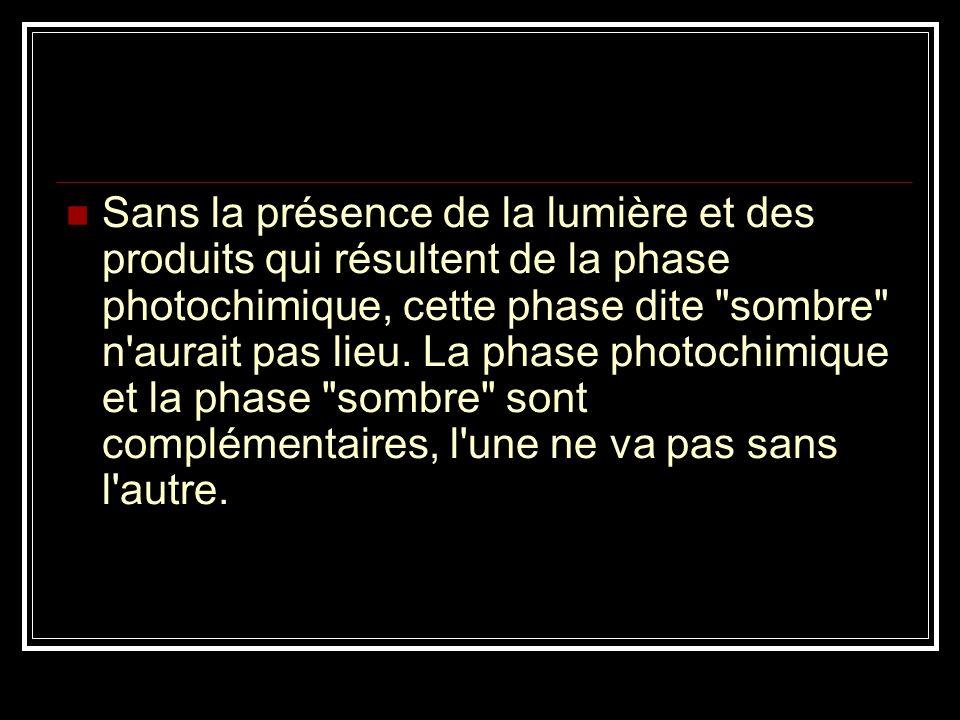 Sans la présence de la lumière et des produits qui résultent de la phase photochimique, cette phase dite sombre n aurait pas lieu.