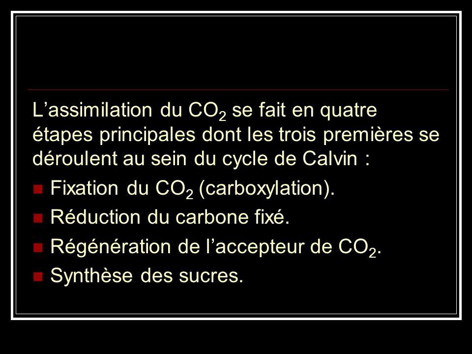 L'assimilation du CO2 se fait en quatre étapes principales dont les trois premières se déroulent au sein du cycle de Calvin :