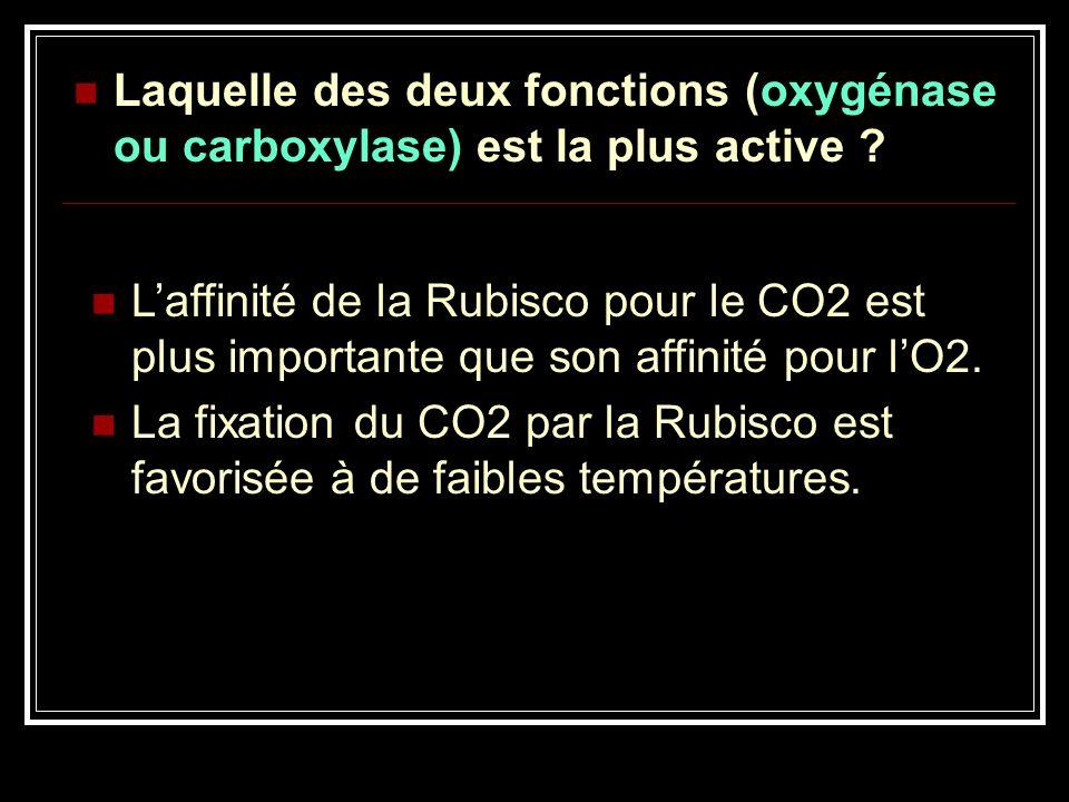 Laquelle des deux fonctions (oxygénase ou carboxylase) est la plus active