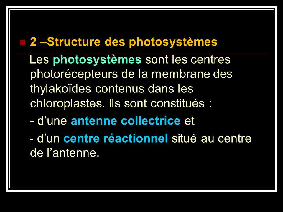 2 –Structure des photosystèmes