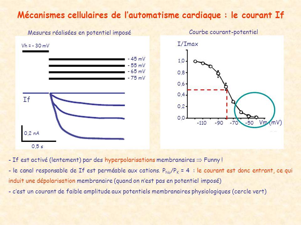 Mécanismes cellulaires de l'automatisme cardiaque : le courant If