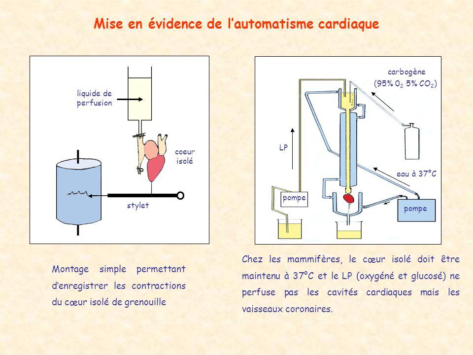 Mise en évidence de l'automatisme cardiaque