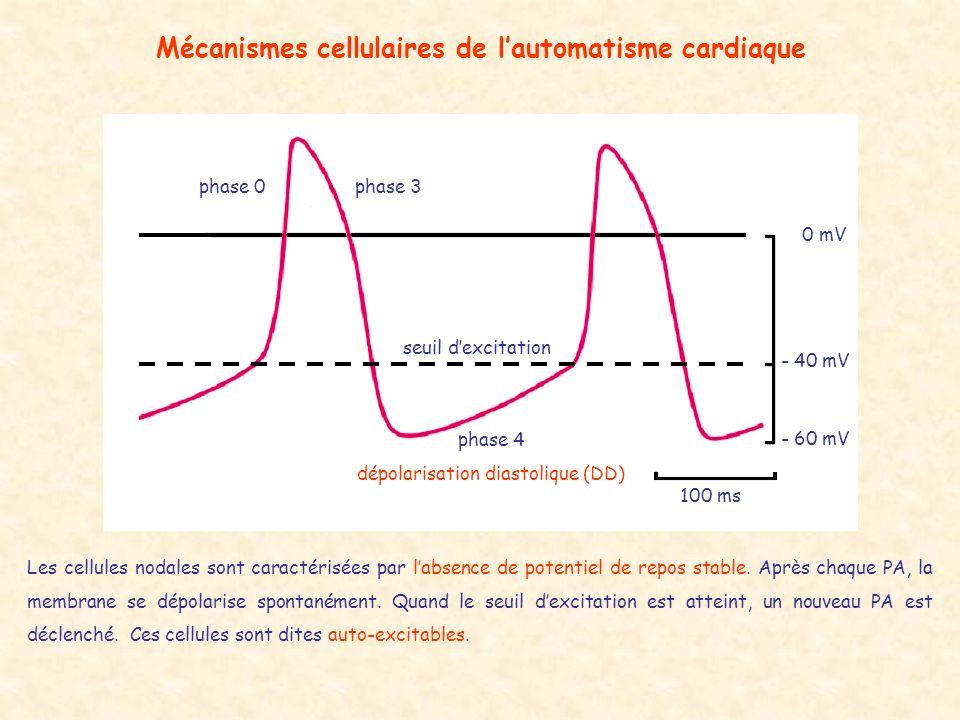 Mécanismes cellulaires de l'automatisme cardiaque
