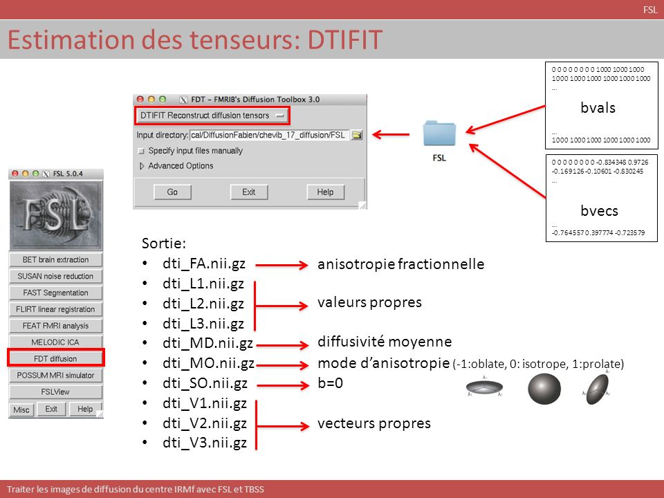 Estimation des tenseurs: DTIFIT