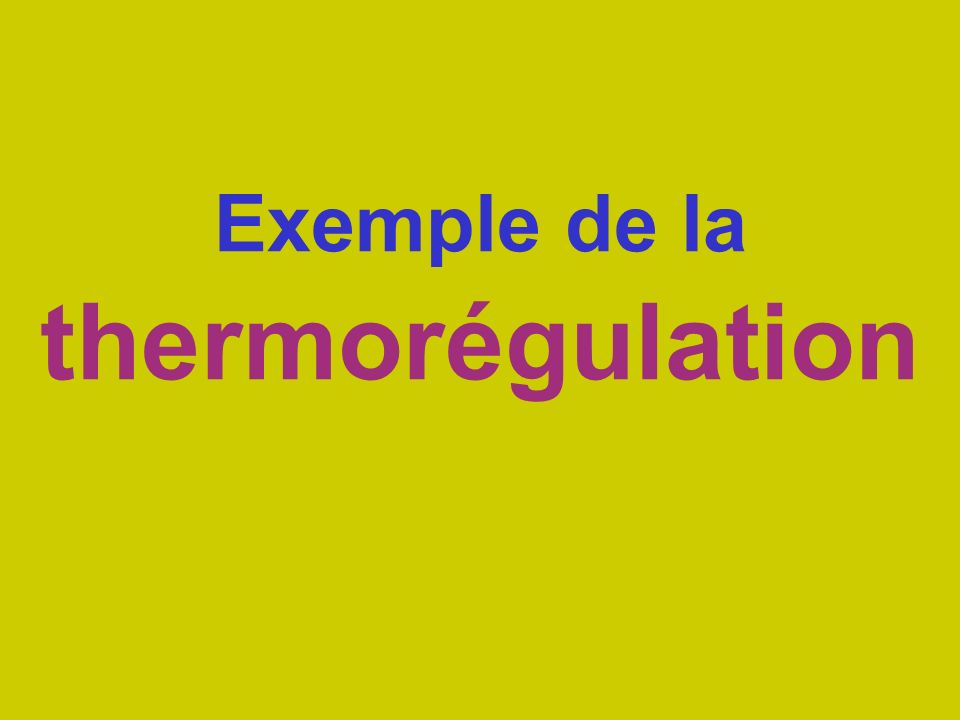 Exemple de la thermorégulation