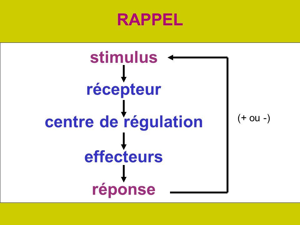 RAPPEL stimulus réponse récepteur centre de régulation effecteurs