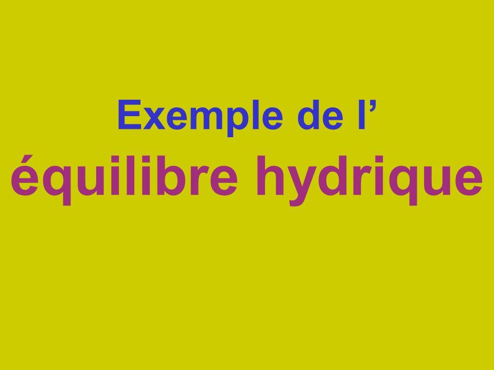 Exemple de l' équilibre hydrique