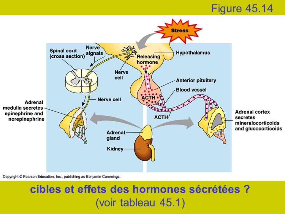 cibles et effets des hormones sécrétées (voir tableau 45.1)