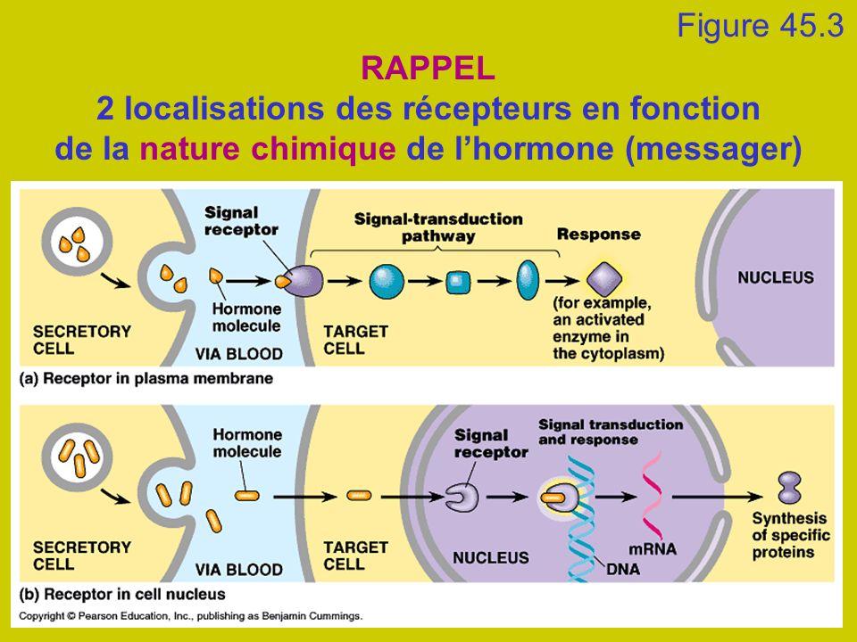 Figure 45.3 RAPPEL 2 localisations des récepteurs en fonction de la nature chimique de l'hormone (messager)