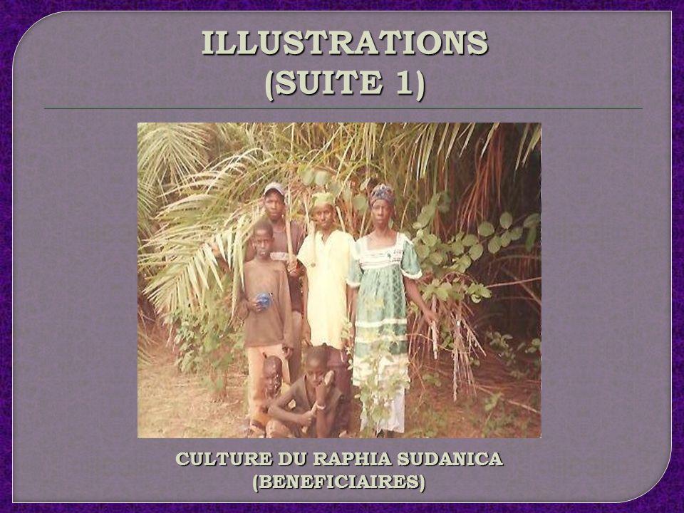 CULTURE DU RAPHIA SUDANICA