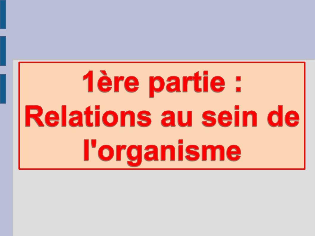1ère partie : Relations au sein de l organisme
