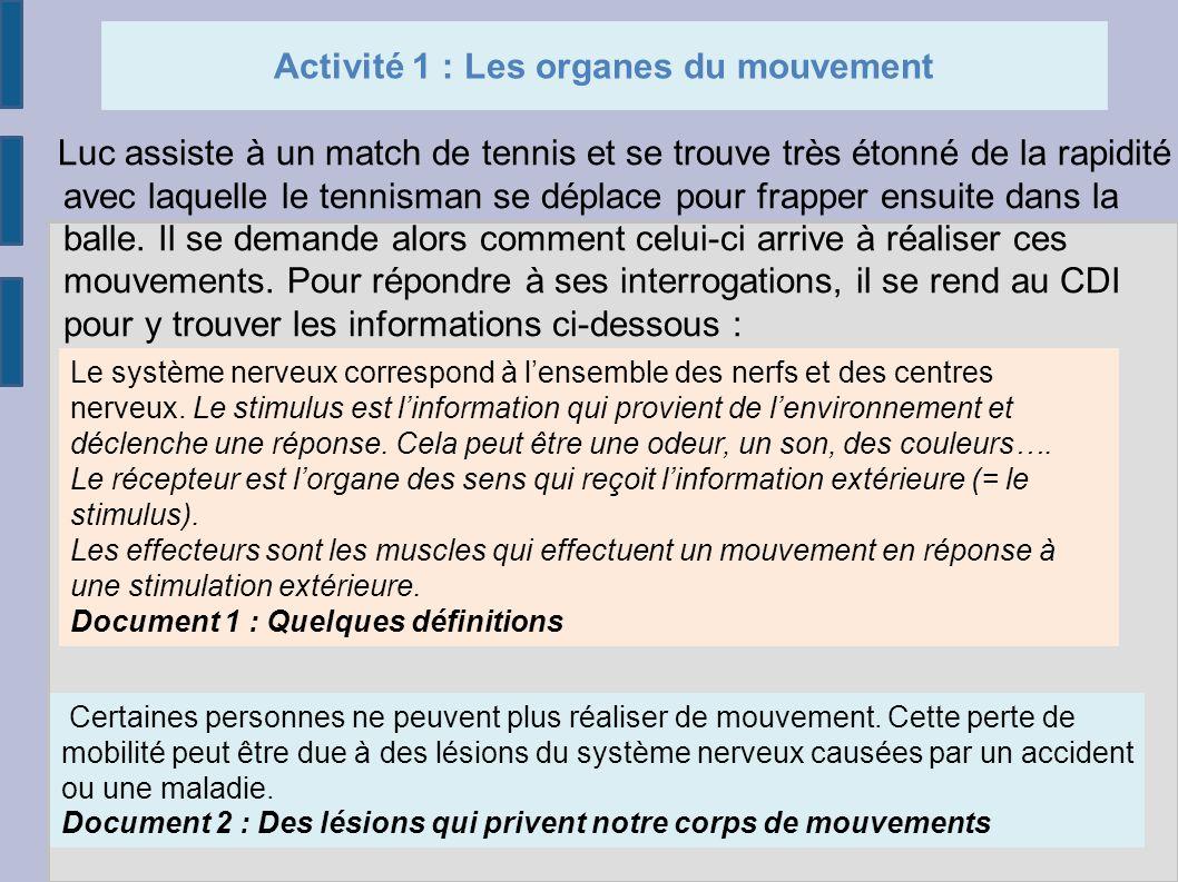 Activité 1 : Les organes du mouvement