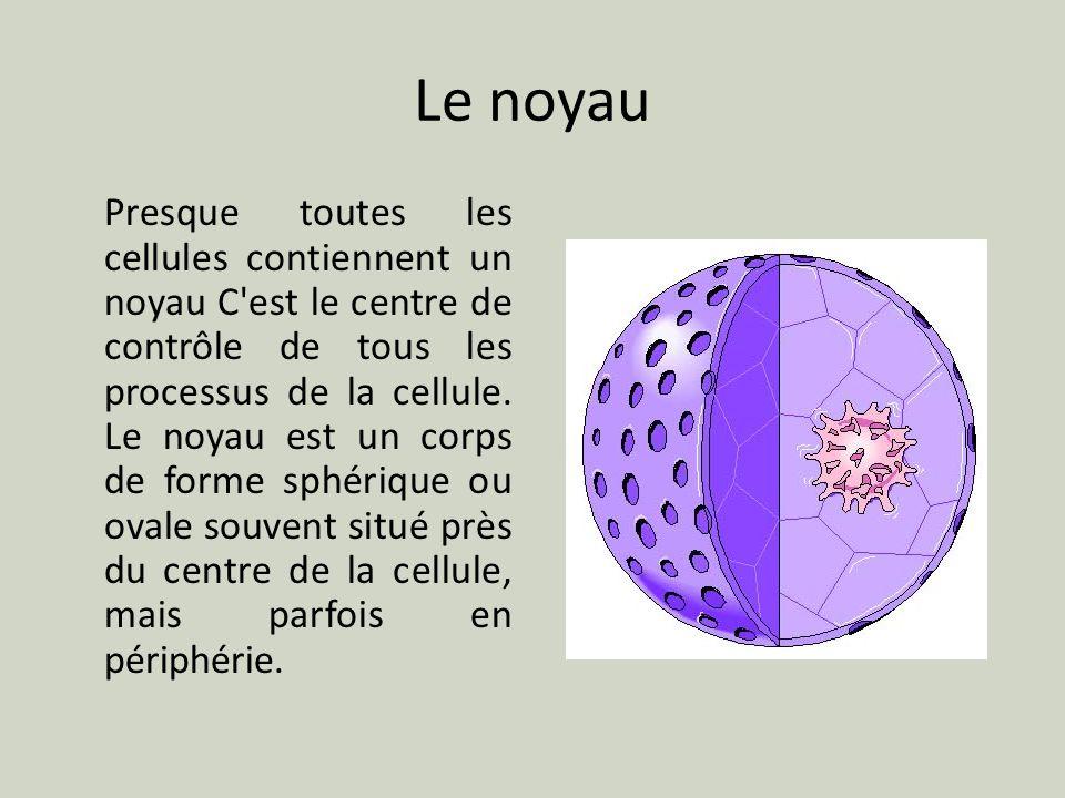 Le noyau