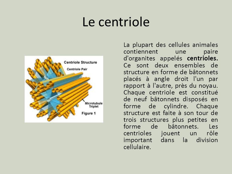 Le centriole