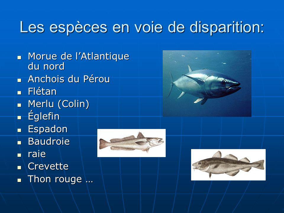 Les espèces en voie de disparition:
