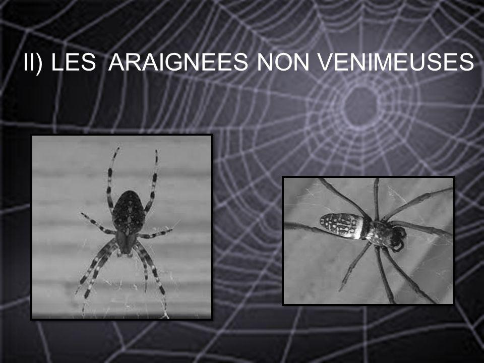 II) LES ARAIGNEES NON VENIMEUSES