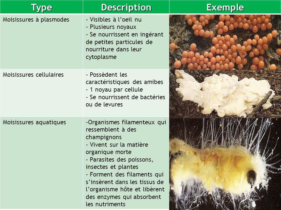 Type Description Exemple