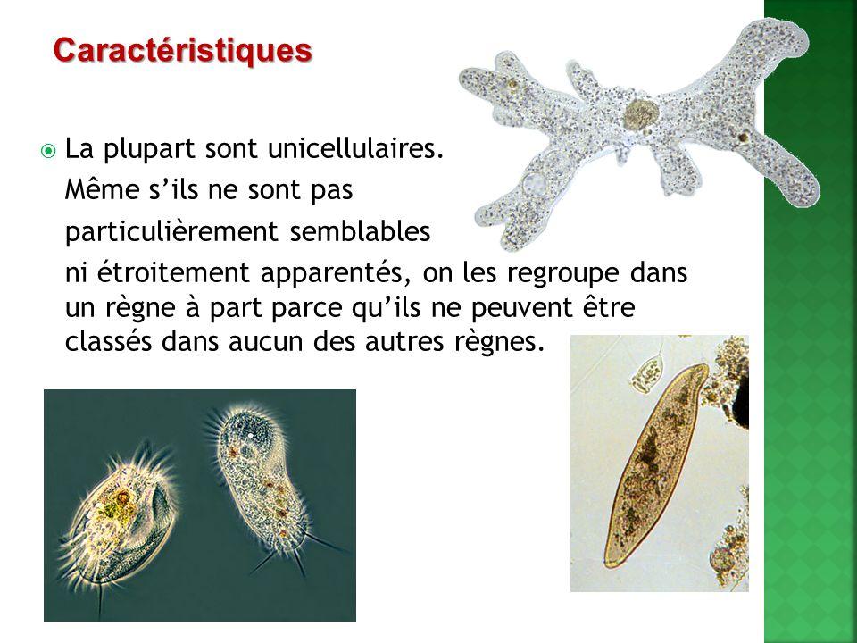 Caractéristiques La plupart sont unicellulaires.