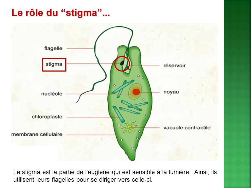 Le rôle du stigma ...