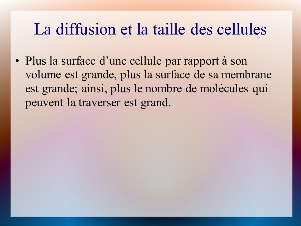 La diffusion et la taille des cellules