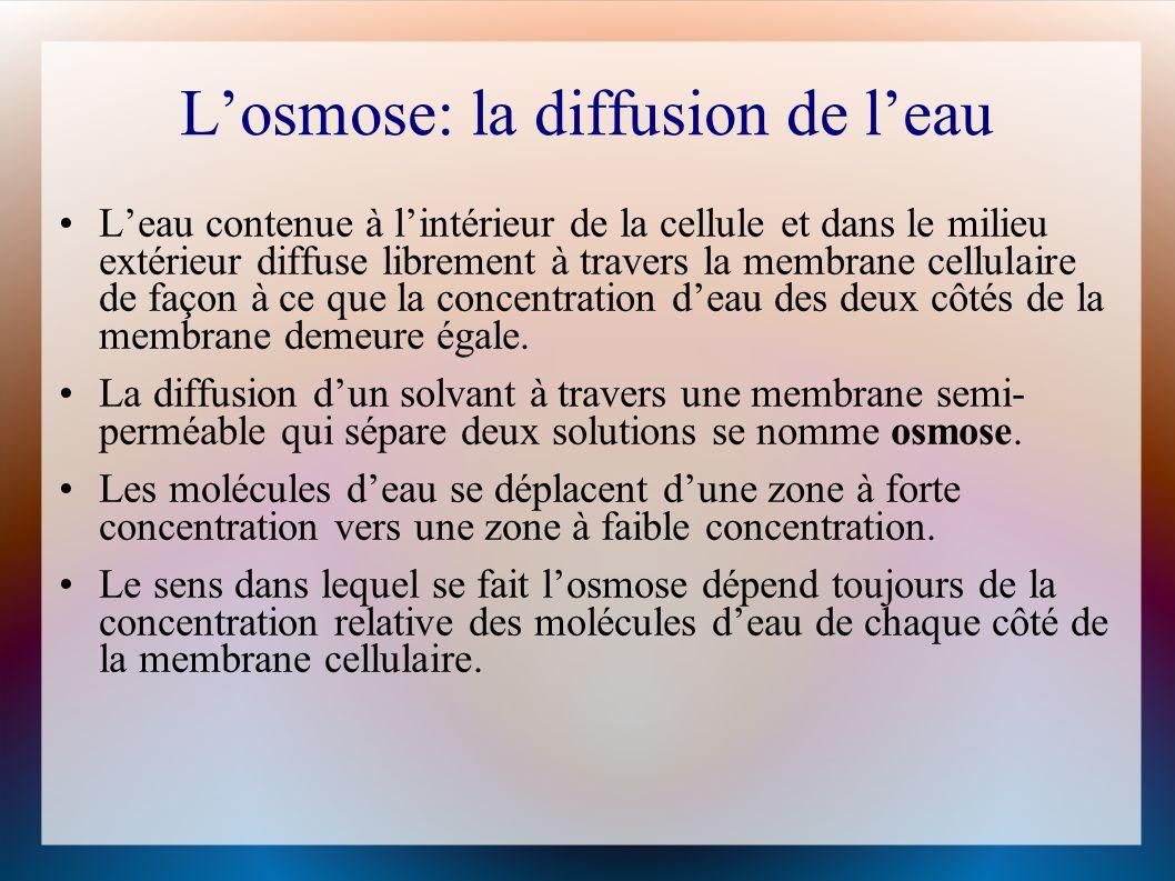 L'osmose: la diffusion de l'eau