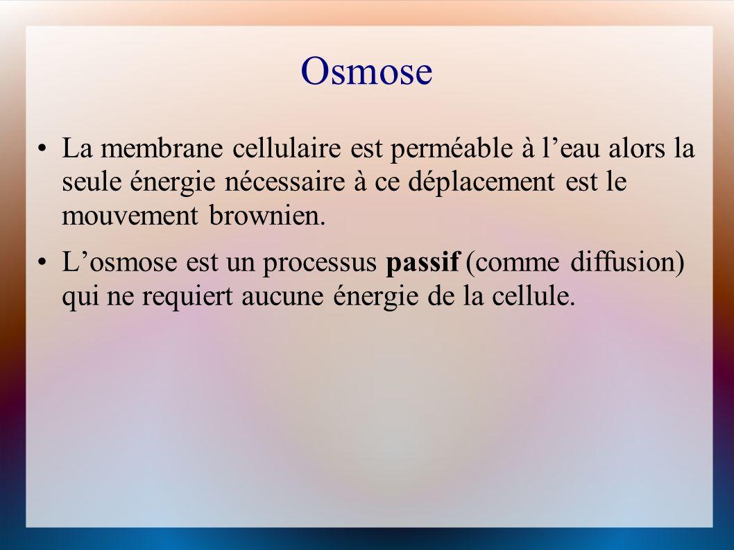 Osmose La membrane cellulaire est perméable à l'eau alors la seule énergie nécessaire à ce déplacement est le mouvement brownien.
