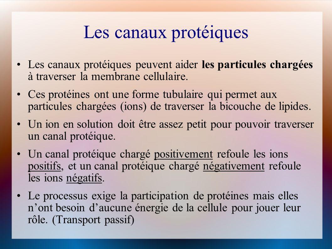 Les canaux protéiques Les canaux protéiques peuvent aider les particules chargées à traverser la membrane cellulaire.