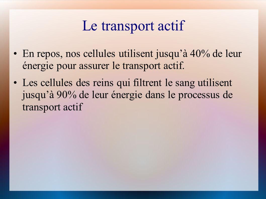Le transport actif En repos, nos cellules utilisent jusqu'à 40% de leur énergie pour assurer le transport actif.
