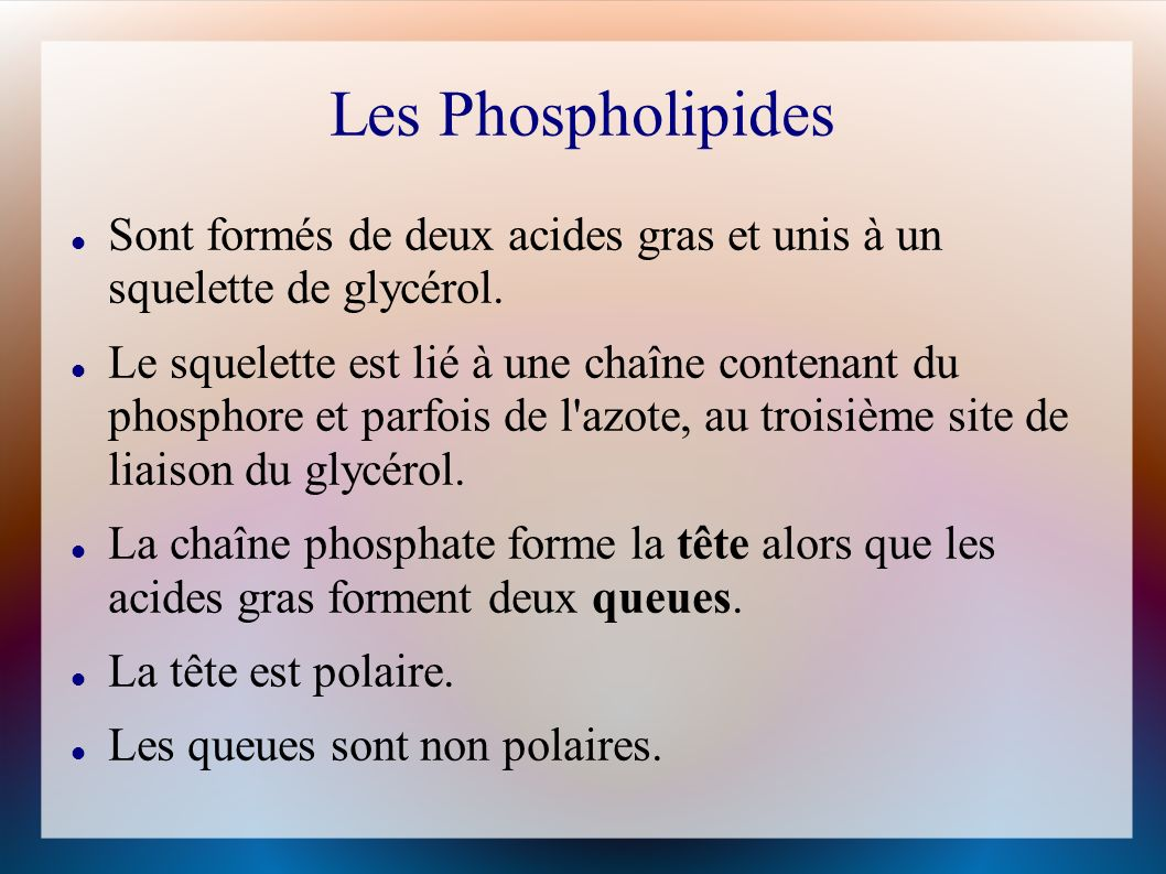 Les Phospholipides Sont formés de deux acides gras et unis à un squelette de glycérol.