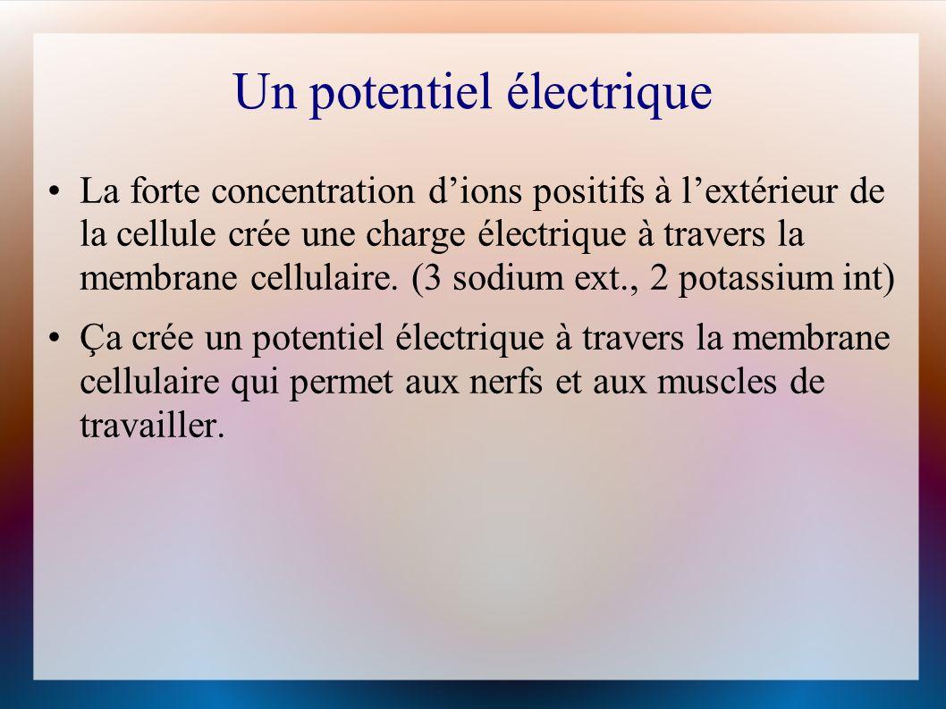 Un potentiel électrique