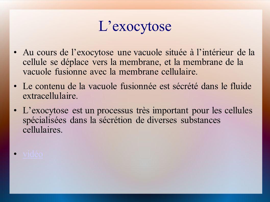 L'exocytose